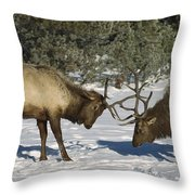 Elk  Bulls Fighting In Yellowstone Throw Pillow