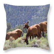 Elk Family - Yellowstone N P Throw Pillow