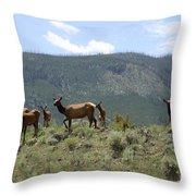 Elk Family Throw Pillow