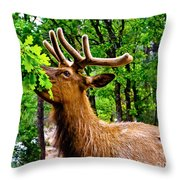 Elk - Grand Canyon National Park Throw Pillow