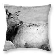 Elk IIi Throw Pillow