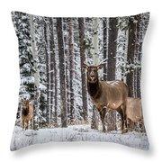 Elk In Jasper Throw Pillow