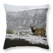 Elk In The Park Throw Pillow