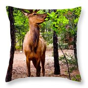 Elk - Mather Grand Canyon Throw Pillow
