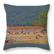 Elk Near Cub Lake Trail In Rocky Mountain National Park-colorado  Throw Pillow