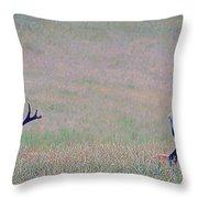 Elk On The Plains 1 Throw Pillow