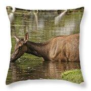 Elk Pictures 36 Throw Pillow