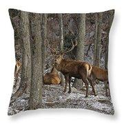 Elk Pictures 45 Throw Pillow
