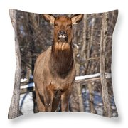 Elk Pictures 50 Throw Pillow