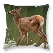 Elk Pictures 74 Throw Pillow