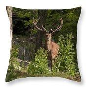 Elk Pictures 82 Throw Pillow