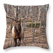 Elk Pictures 86 Throw Pillow