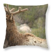 Elk Sky Gaze Throw Pillow