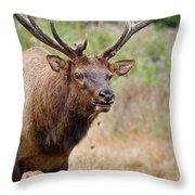Elk Staring Throw Pillow
