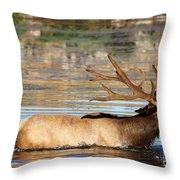 Elk Cooling Down In Lake Throw Pillow