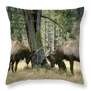 Elks Sparring Yellowstone Np Wyoming Throw Pillow
