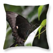 Emerald Peacock Swallowtail Butterfly #6 Throw Pillow