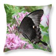 Emerald Peacock Swallowtail Butterfly #5 Throw Pillow