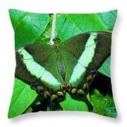 Emerald Swallowtail Butterfly Throw Pillow