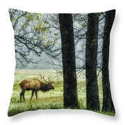 Emerging From The Fog Throw Pillow by Priscilla Burgers