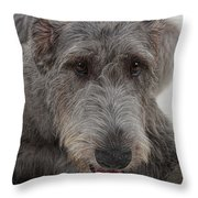 Irish Wolfhound IIi Throw Pillow
