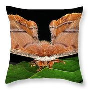 Emperor Gum Moth - 6 Inch Wing Span Throw Pillow
