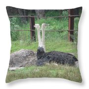 Emu Birds Throw Pillow