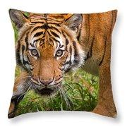 Endangered Species Sumatran Tiger Throw Pillow