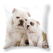 English Bulldog, Adult And Puppy Throw Pillow