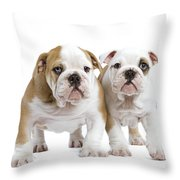 English Bulldog Puppies Throw Pillow