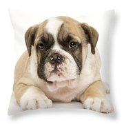 English Bulldog Puppy Throw Pillow