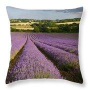English Lavender Near Alton In Hampshire Throw Pillow