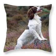 English Springer Spaniel Dog Throw Pillow