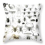 Entomology Myriapoda And Arachnida  Throw Pillow