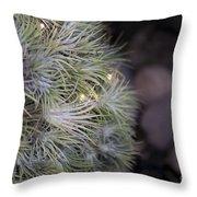 Epiphyte Globe Throw Pillow