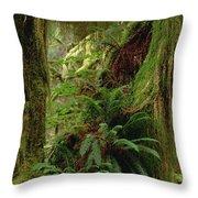 Epiphytic Sword Fern Throw Pillow