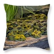 Ethiopian Mountain Vipers Throw Pillow