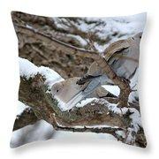 Eurasian  Collard Doves Throw Pillow