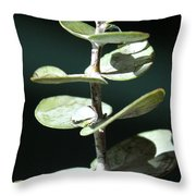 Eucalyptus Tears Throw Pillow