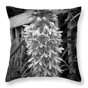 Eucomis Named Bicolor Throw Pillow