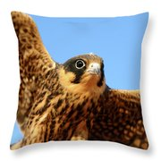 Eurasian Hobby Falco Subbuteo In Throw Pillow