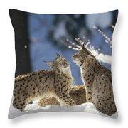 Eurasian Lynx Pair Bayerischer Wald Np Throw Pillow