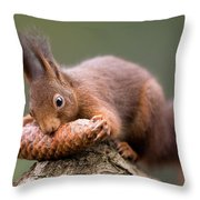 Eurasian Red Squirrel Biting Cone Throw Pillow by Ingo Arndt