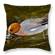 Eurasian Wigeon Feeding Throw Pillow