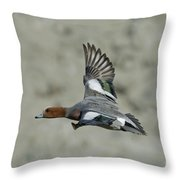 Eurasian Wigeon Flying Throw Pillow