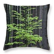 European Beech Tree In Noway Spruce Throw Pillow