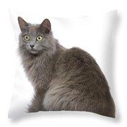 European Blue Cat Throw Pillow