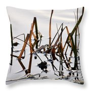 European Common Brown Frog Throw Pillow