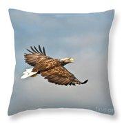 European Flying Sea Eagle 3 Throw Pillow