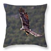 European Flying Sea Eagle 4 Throw Pillow